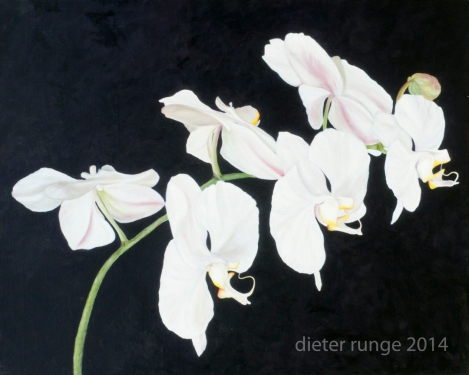 White Orchids.72
